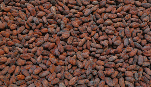Raw Sorted Cacao Beans